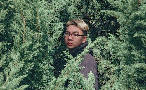 Imagine de stoc gratuită din arbori, arbori veșnic verzi, culori, în timpul zilei
