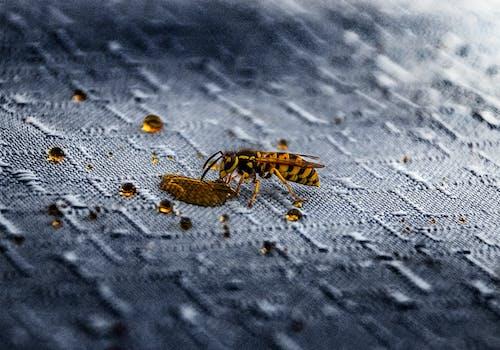Kostenloses Stock Foto zu flügel, fokus, insekt, klein