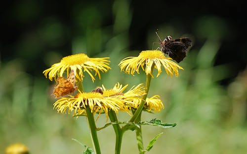 Brown Moth Perched on Yellow Flower at Daytime