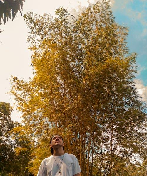 Fotos de stock gratuitas de arboles, cielo, escénico, hombre