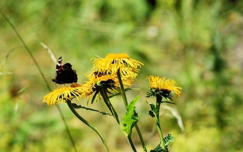 꽃에 앉은 나비, 노란 꽃, 배경이 흐린, 벌의 무료 스톡 사진