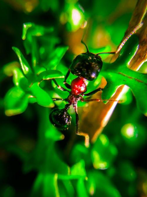 Gratis stockfoto met bomen, gras, groen, insect
