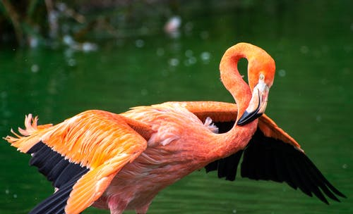 Бесплатное стоковое фото с выборочный фокус, дикая природа, длинная шея