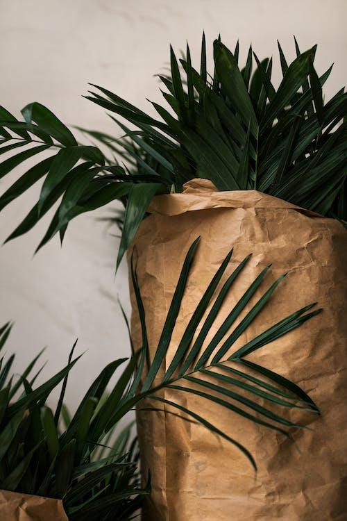 Fotos de stock gratuitas de árbol, Arte, bambú