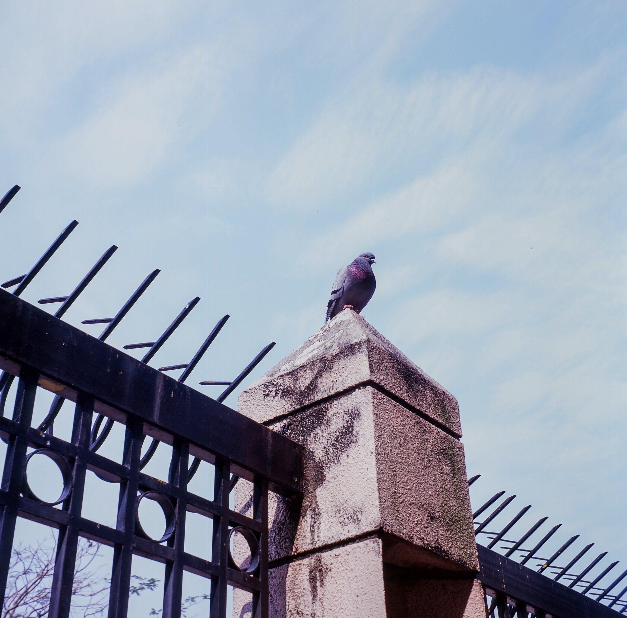 Free stock photo of analog, animal, fences, mood