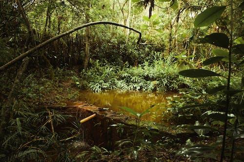 ジャングル, バックグラウンド, 成長, 木の無料の写真素材
