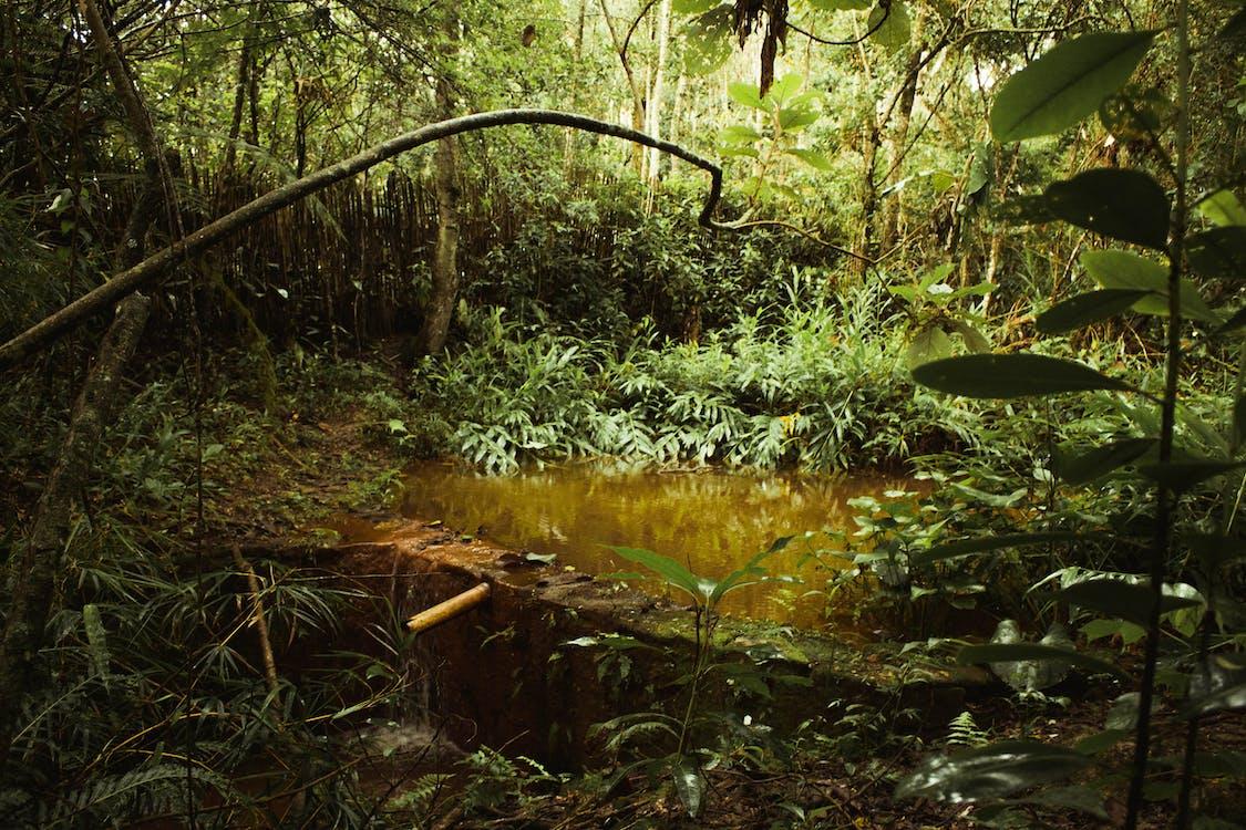 白天被植物包围的池塘