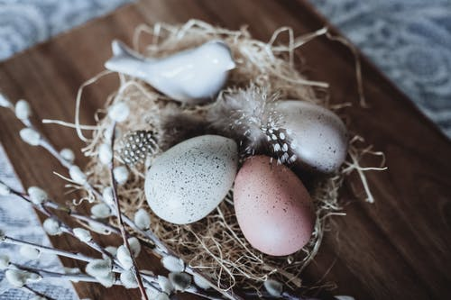 Photography of Three Quail Eggs on Nest Decor