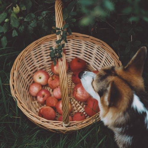 Kostenloses Stock Foto zu bauernhof, essen, farm