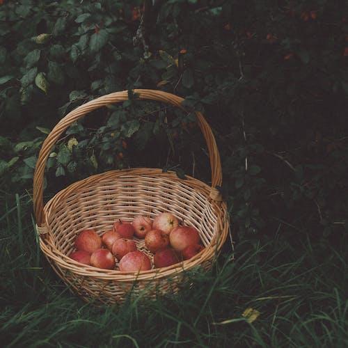 Kostenloses Stock Foto zu apfel, apple, blatt