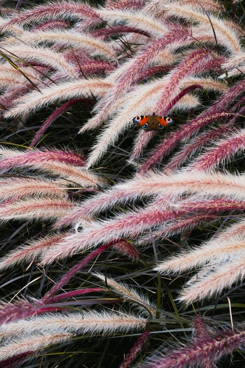 Orange and Black Ladybug on Green and Brown Plant
