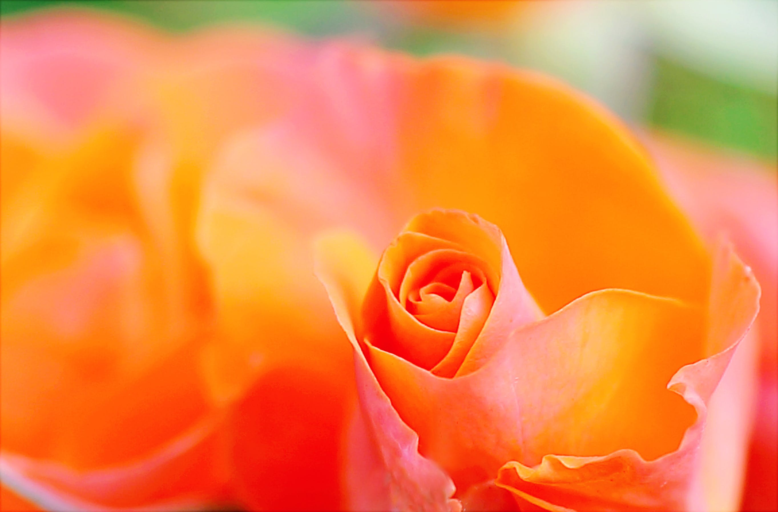 Shallow Focus Photography of Orange Petal Flower