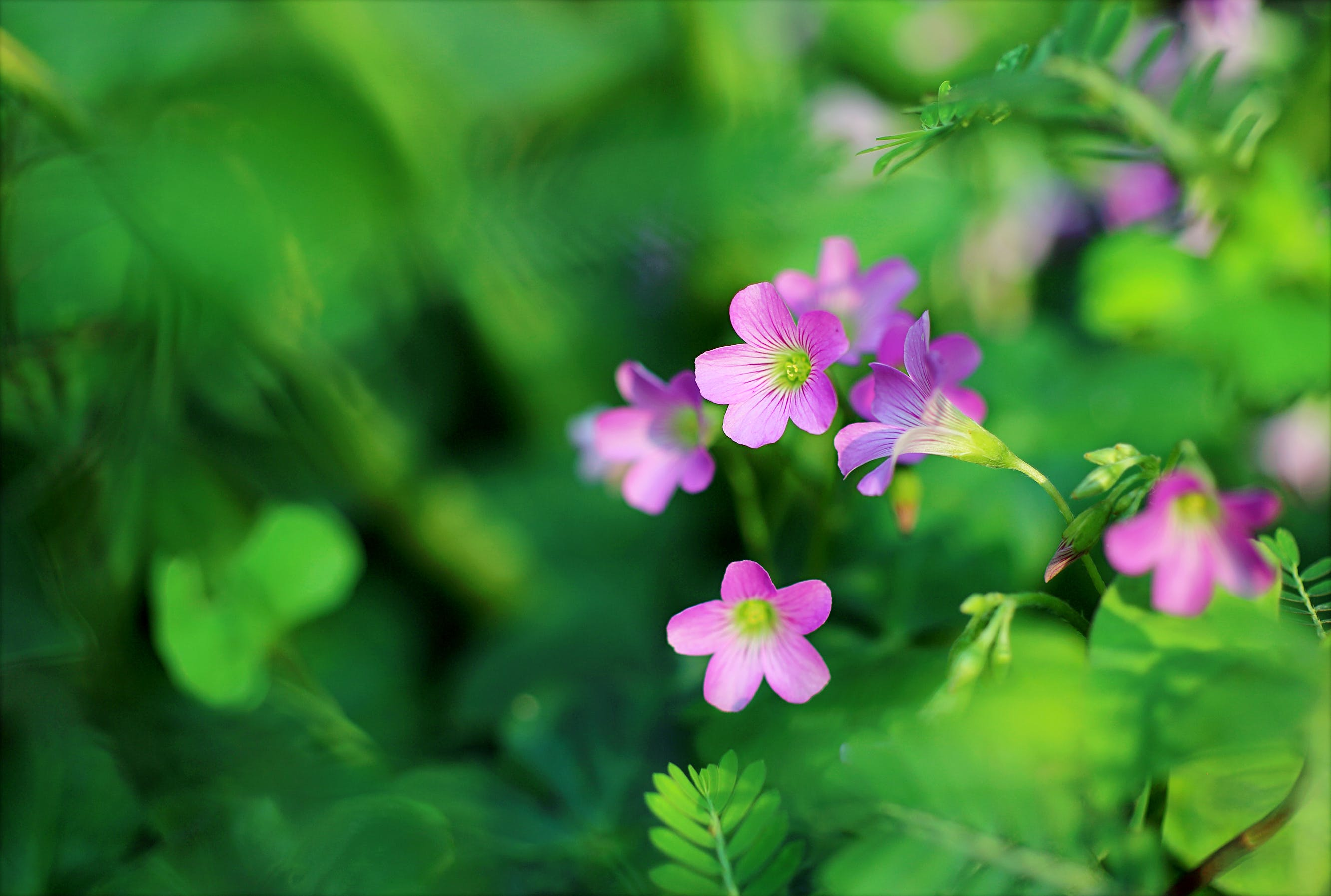 Shallow Focus Photo of Pink Petaled Flowers
