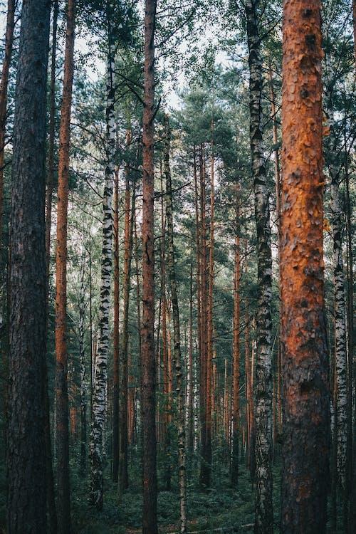 Foto stok gratis batang pohon, bimbingan, cabang