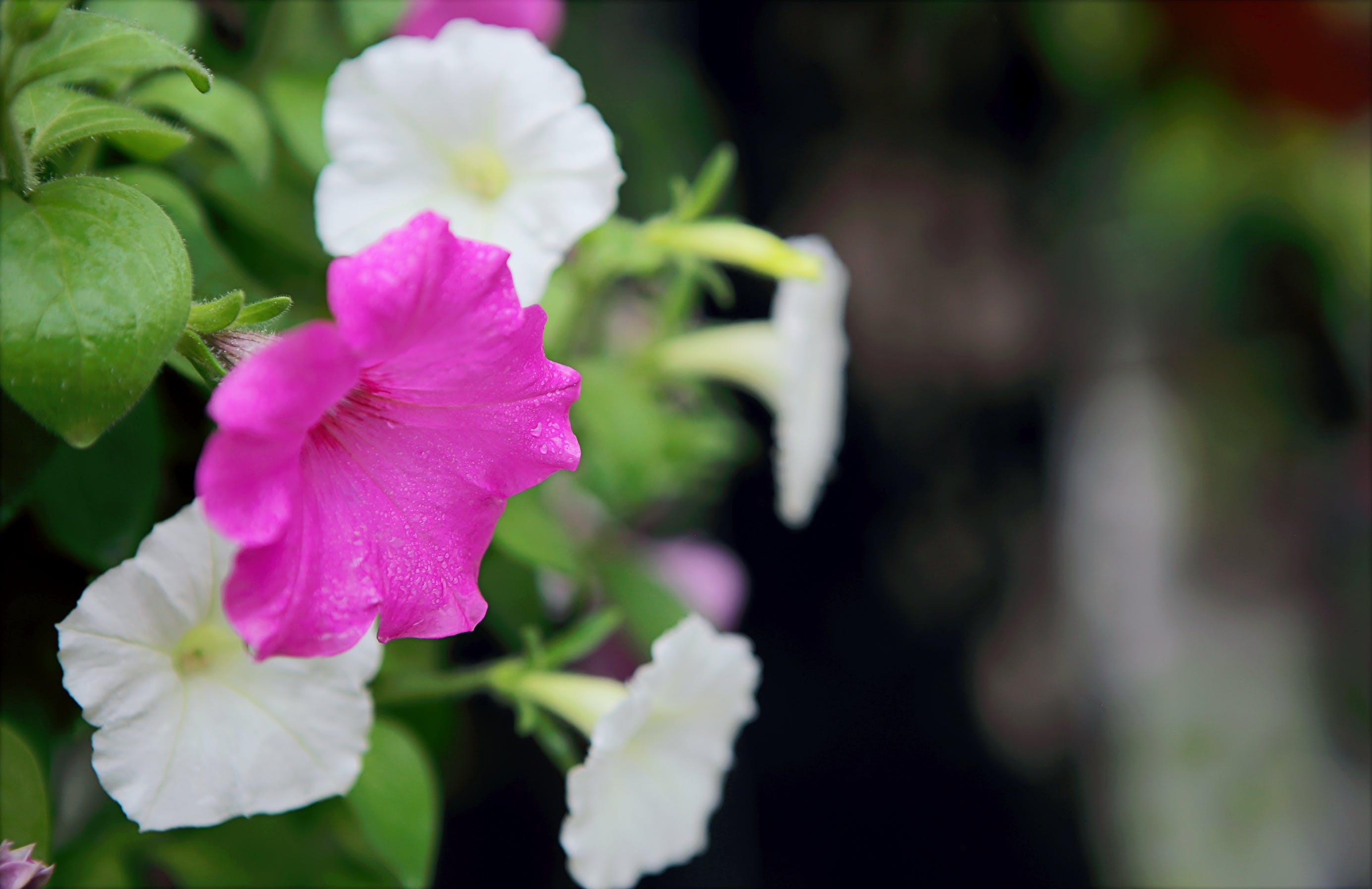 Bahçe, bitki örtüsü, bulanık arka plan, büyüme içeren Ücretsiz stok fotoğraf