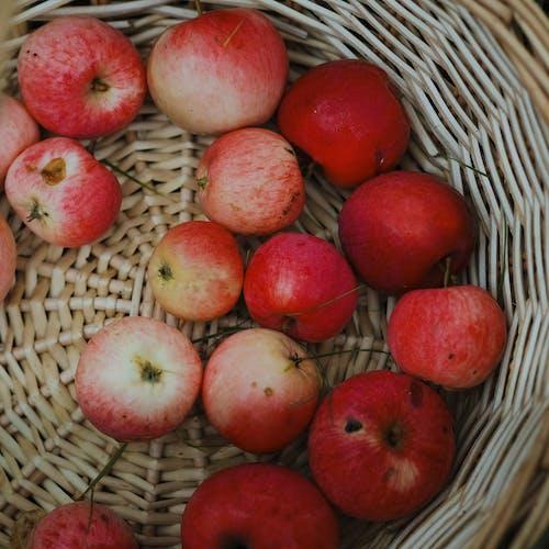 Kostenloses Stock Foto zu apfel, apple, ausgewogene ernährung