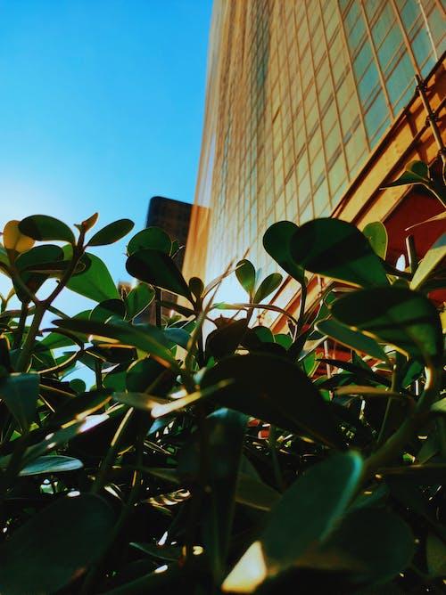 Foto profissional grátis de área urbana, close, lindo pôr do sol