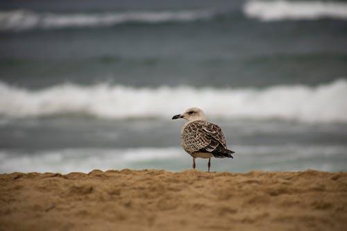 Free stock photo of action, animal, beach