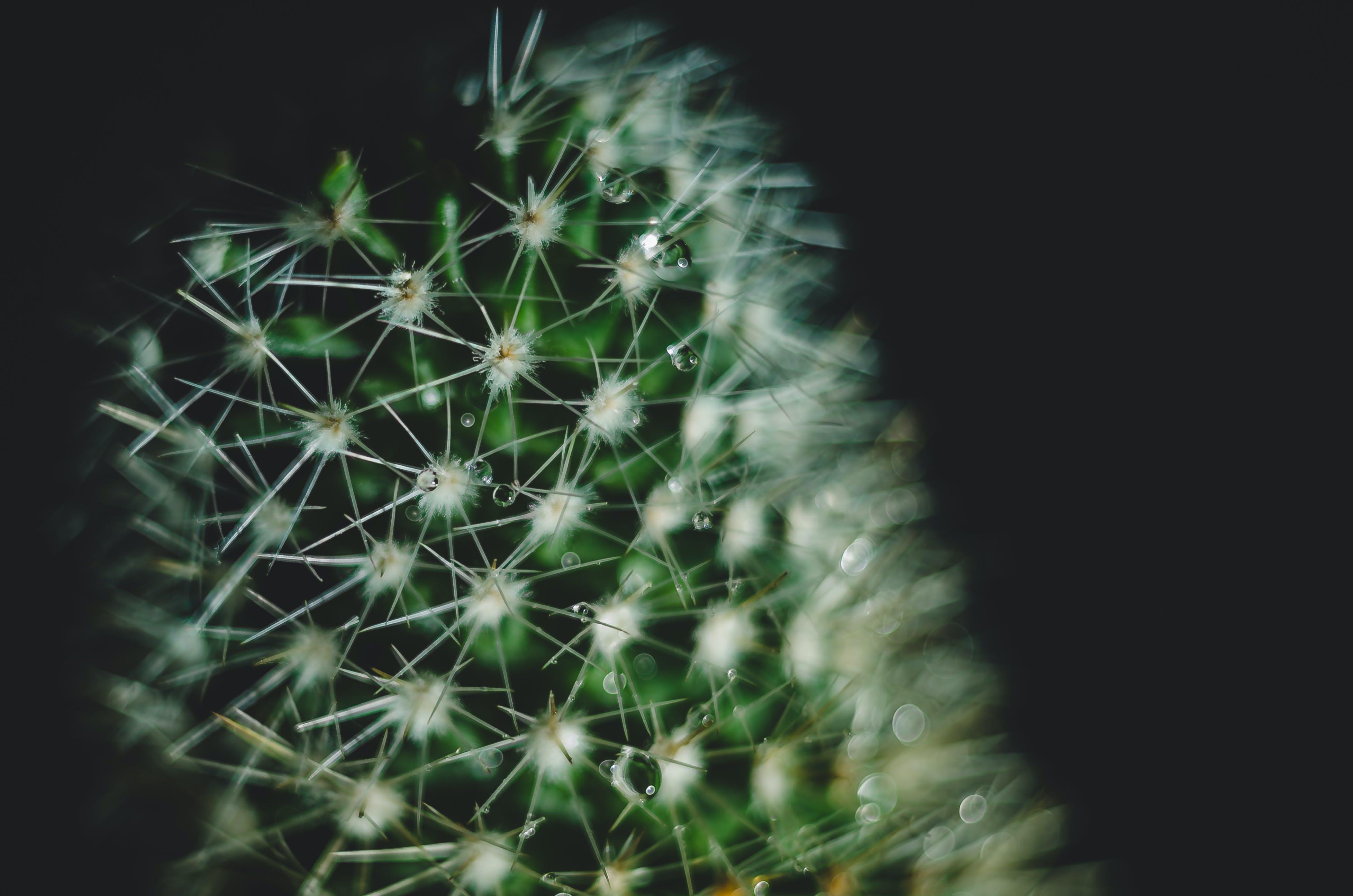 cactus, drop of water
