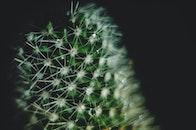 drop of water, cactus