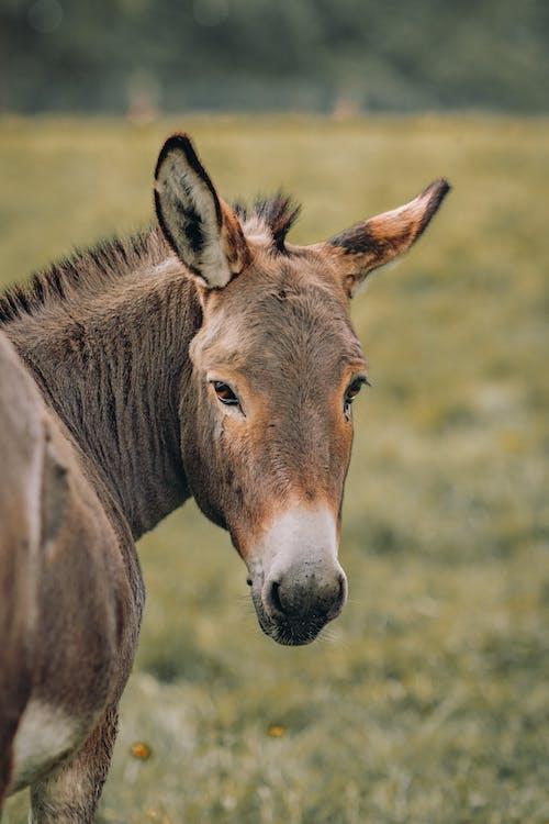 Free stock photo of animal, animal head, close-up