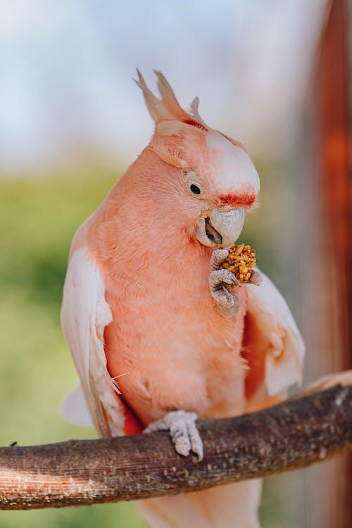 Pink Bird on Brown Tree Branch