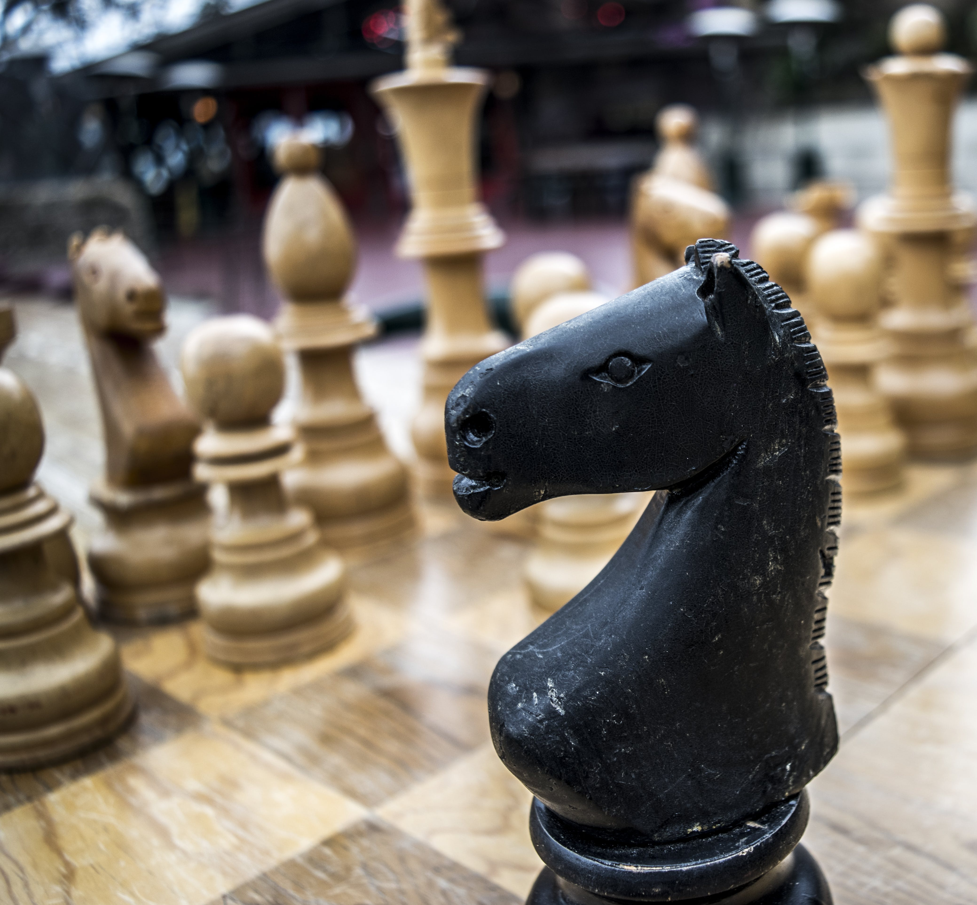 Free stock photo of chess, game, knight, strategy