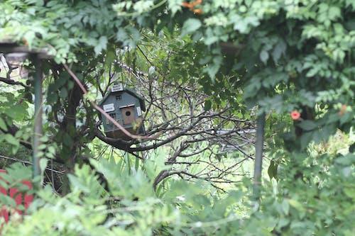 Foto stok gratis hutan, kabin, kebun, nuansa kayu