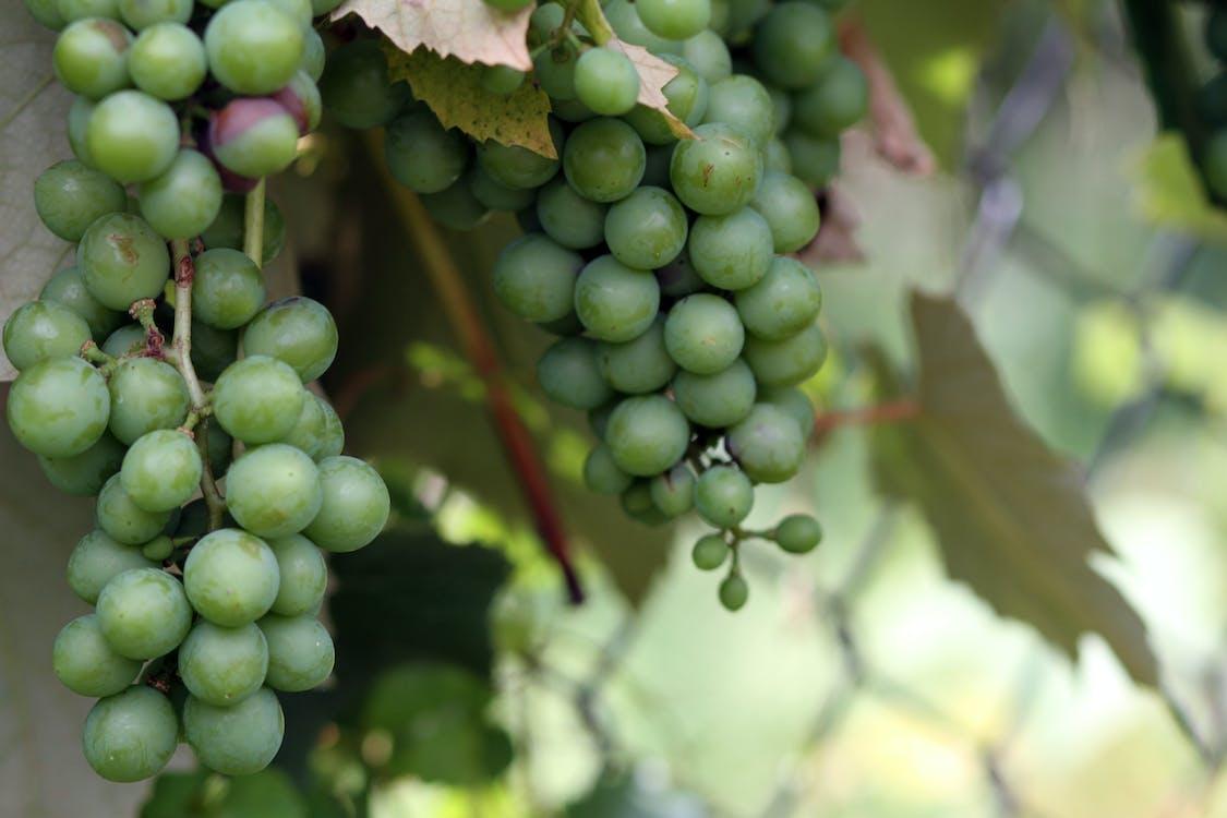 frukt, trädgård, vin