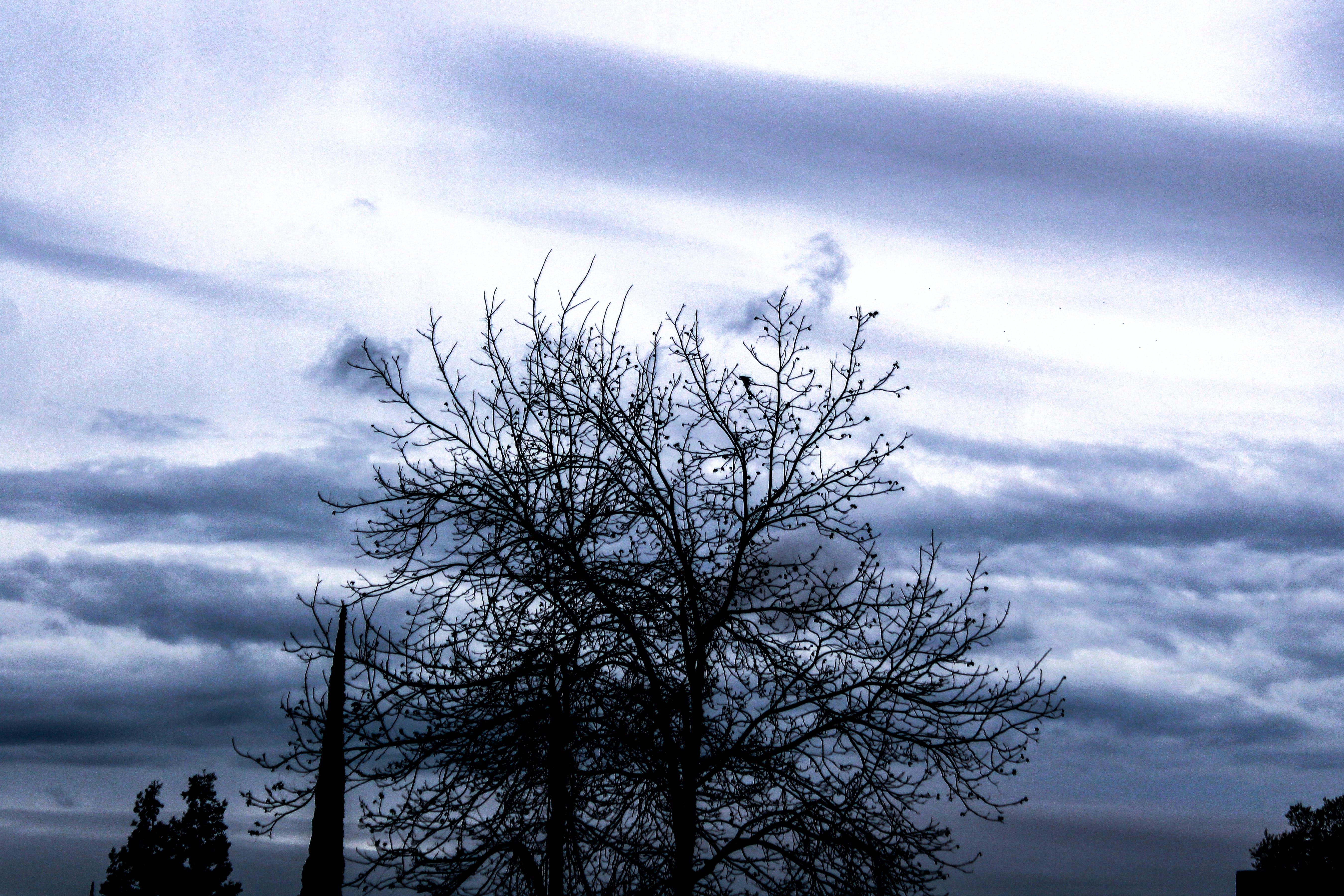 Δωρεάν στοκ φωτογραφιών με δέντρο, κλαδιά, ουρανός, σύννεφα