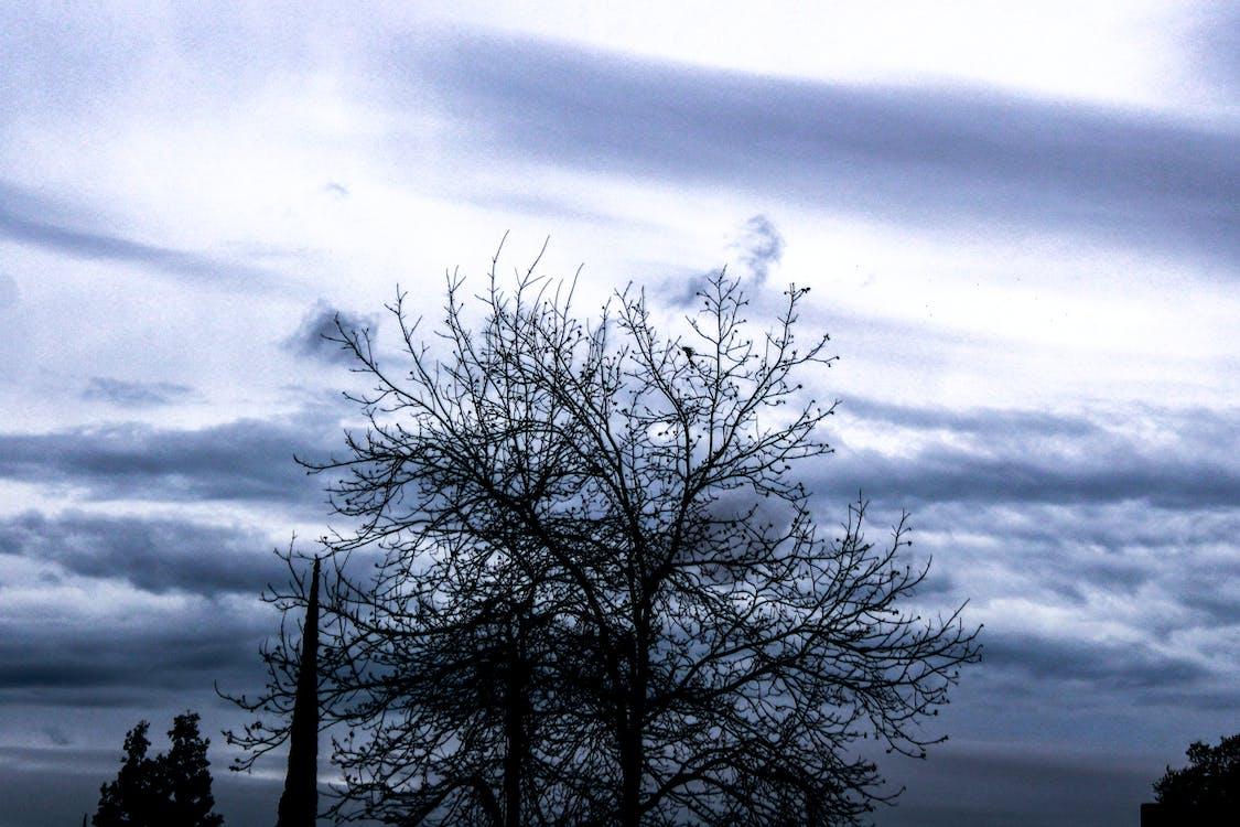 árbol, cielo, cielo nublado
