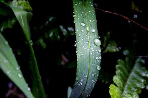 Základová fotografie zdarma na téma barvy, dešťové kapky, jasný, kapalina