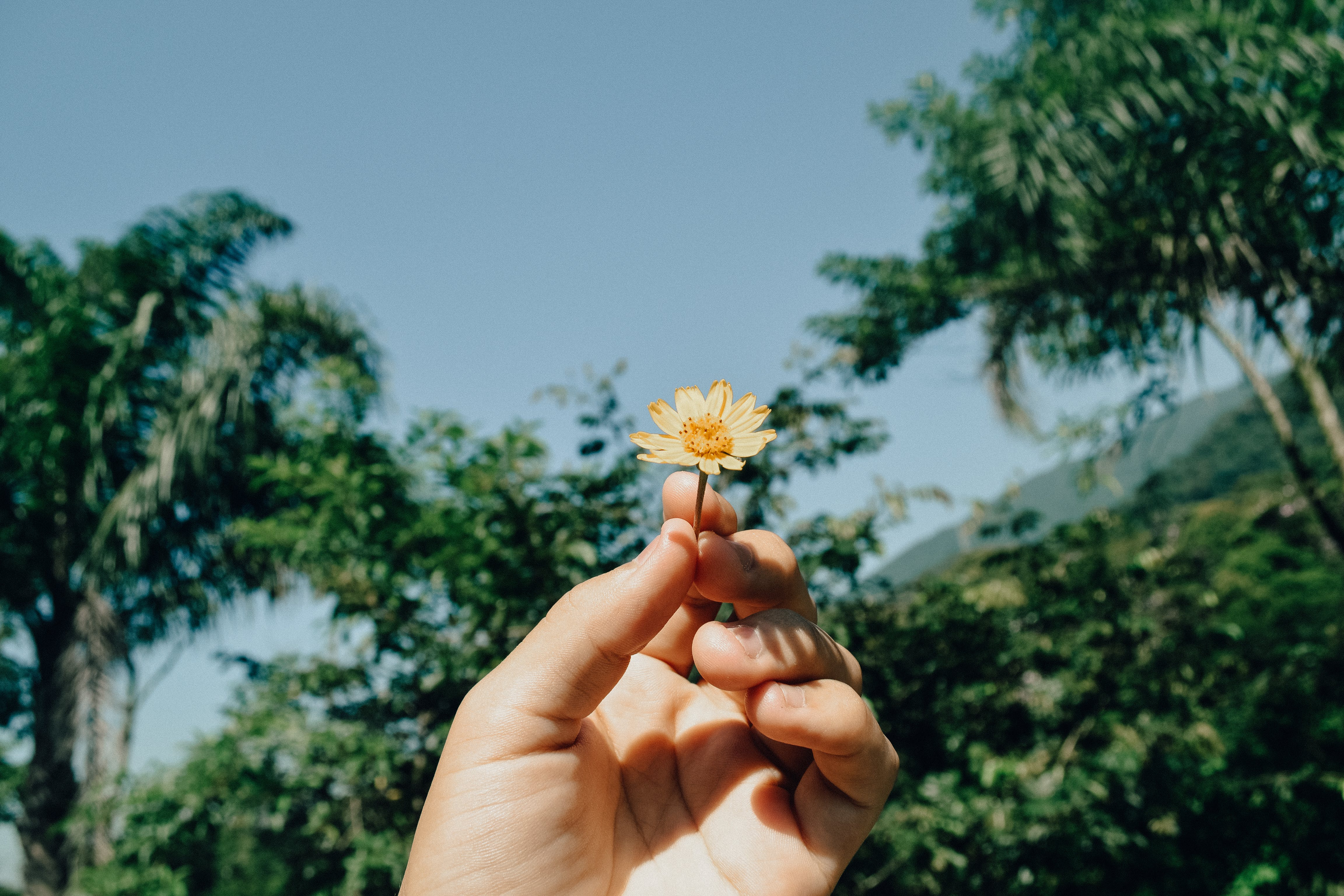 Person Holding White Aster Beside Trees Under White Clouds Blue Skies Daytime