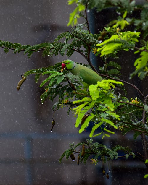 Free stock photo of animal, bird, branch
