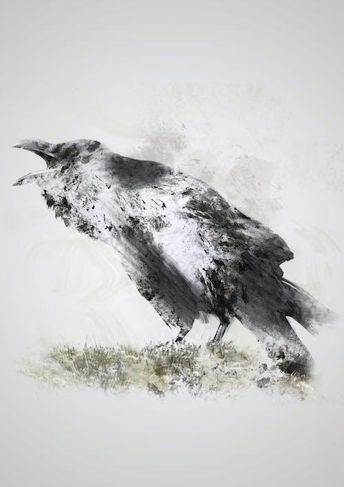 冥想, 冷靜, 唱歌的鳥兒, 國家地理 的 免費圖庫相片