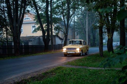 Imagine de stoc gratuită din arbore, asfalt, automobil