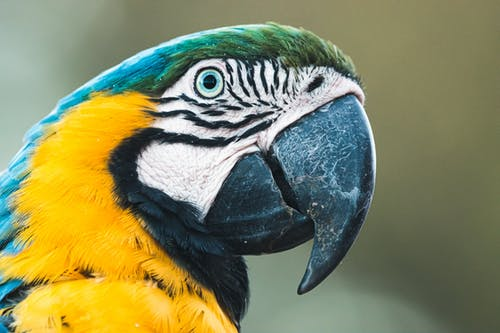 Close-Up Photo of a Colorful Macaw Parrot