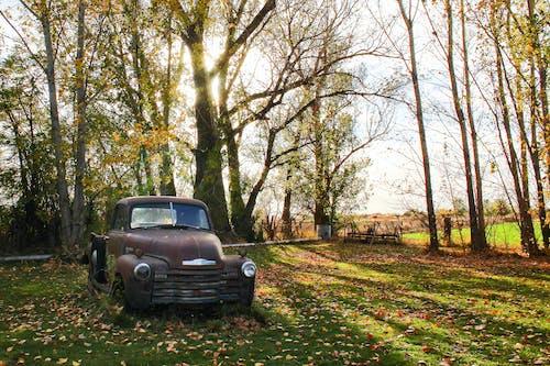 Gratis lagerfoto af dagslys, græs, landdistrikt, landet