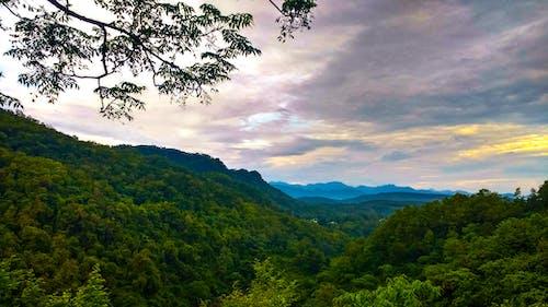 Δωρεάν στοκ φωτογραφιών με βουνά, γραφικός, δασικός, δέντρα