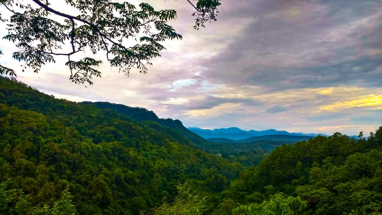 alberi, boschi, cielo