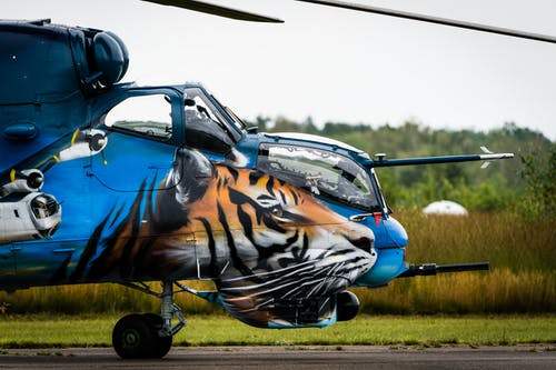 Tiger and Tiger Riding on Blue Car