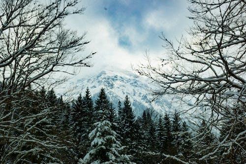 下雪的, 冬季, 冬季景觀, 冰 的 免費圖庫相片