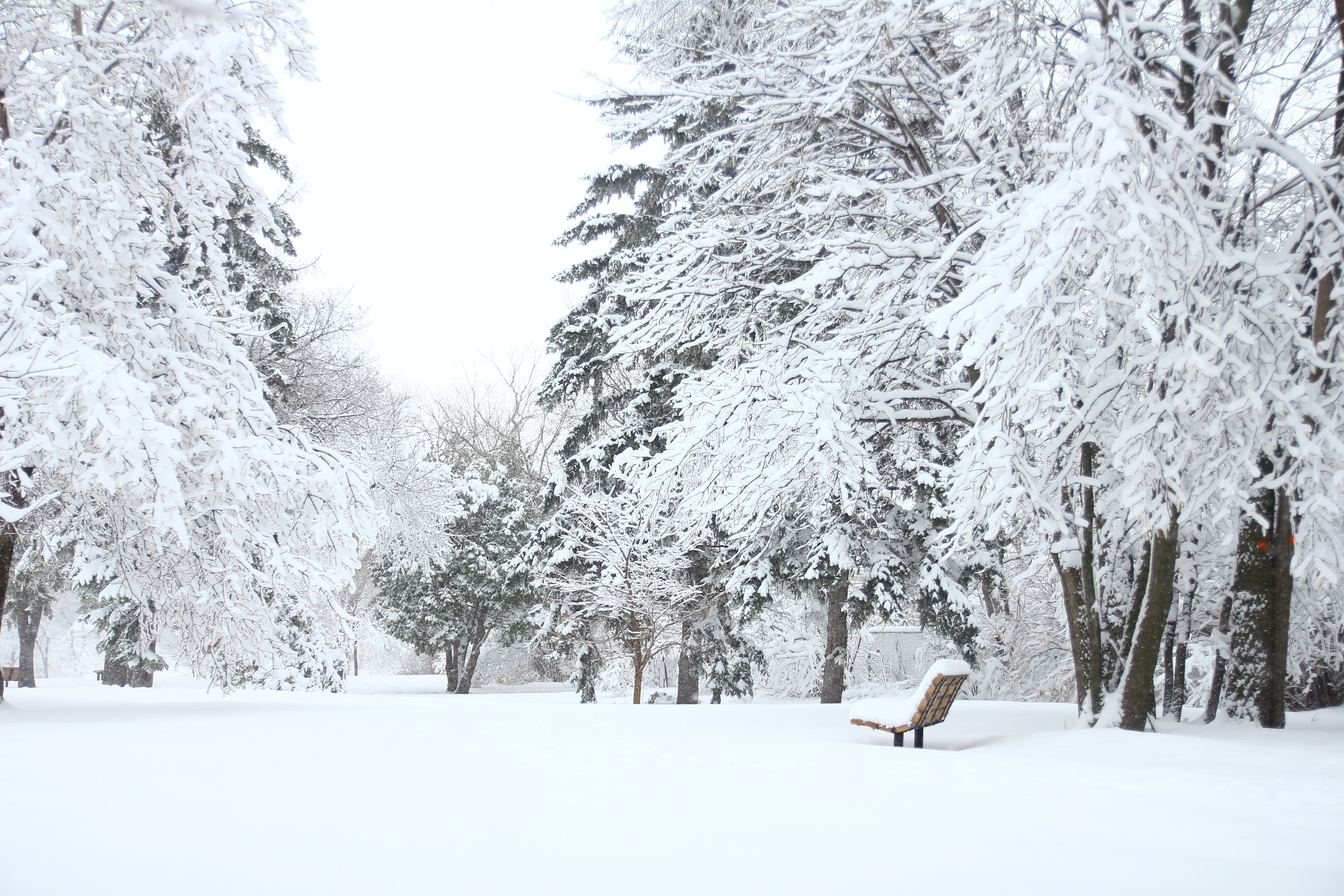 Photography Of Fir Trees Covered in SNow