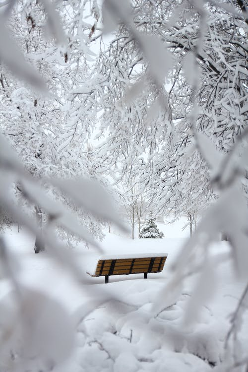 Brown Outdoor Bench With Snow on Top