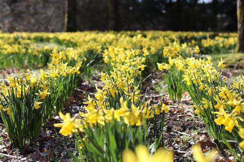 Photos gratuites de brillant, croissance, fleurir, fleurs