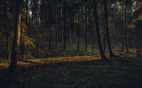Immagine gratuita di alberi, ambiente, boschi, erba
