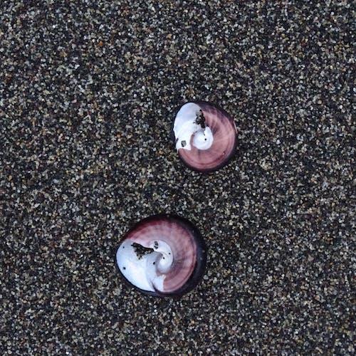 Free stock photo of beach, beach sand, purple