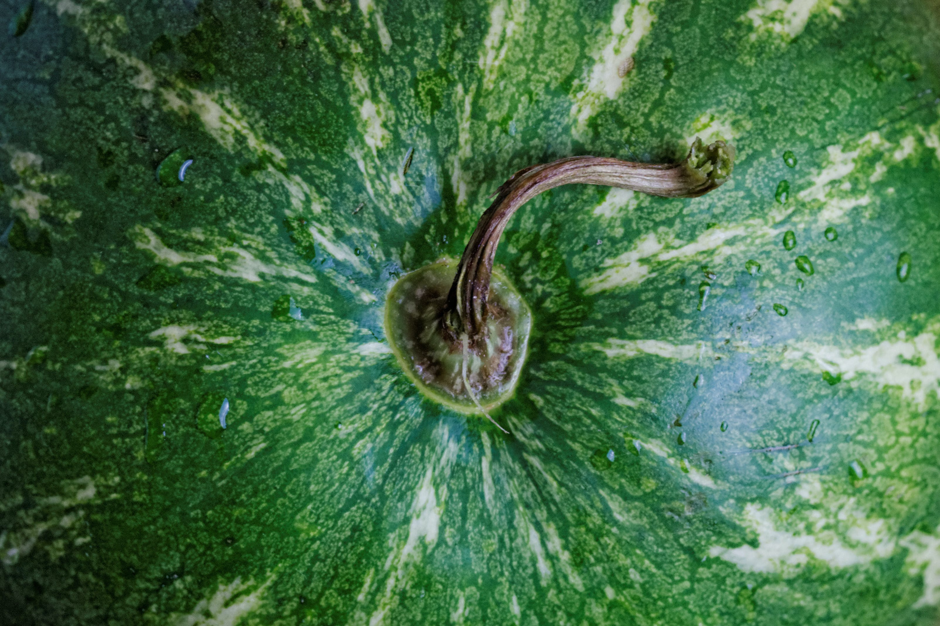 Close-up Photography of Green Watermelon