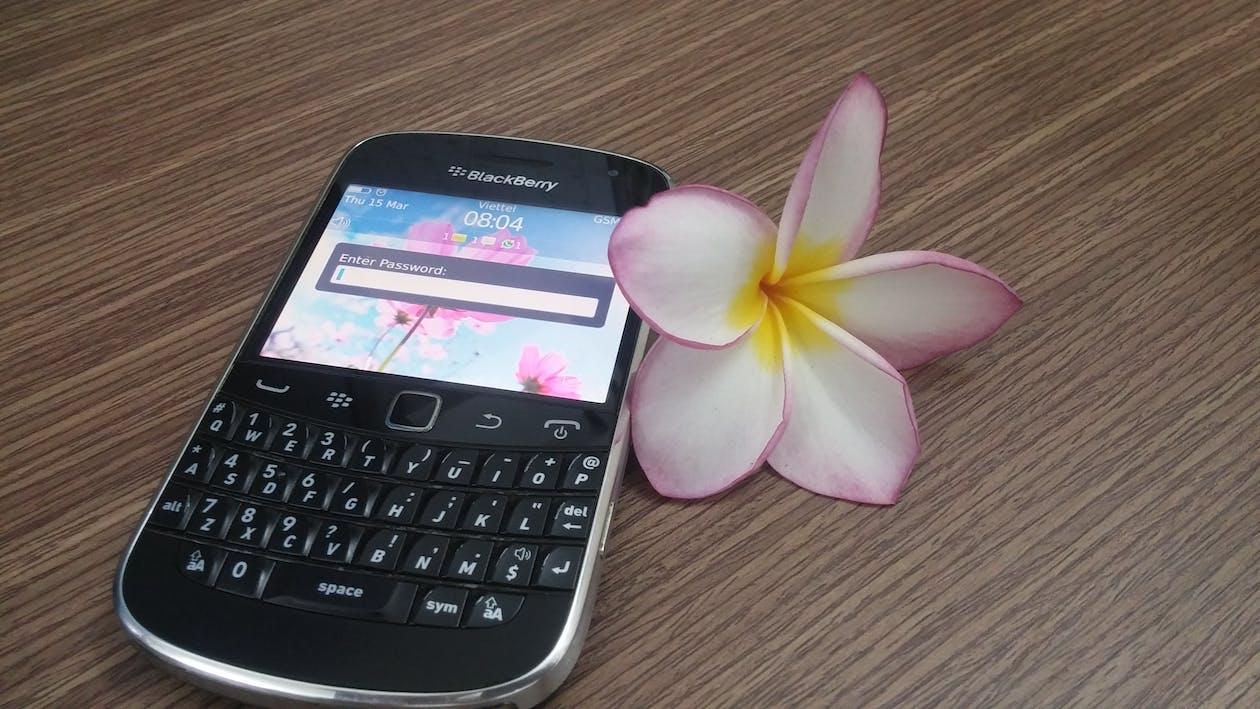 krásné květiny, květiny, porcelánový květ