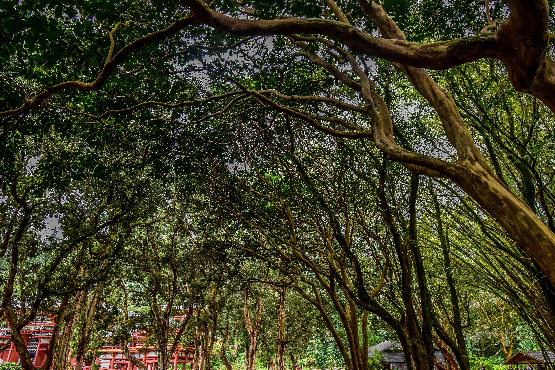 Gratis arkivbilde med moder natur, natur, peace, skog